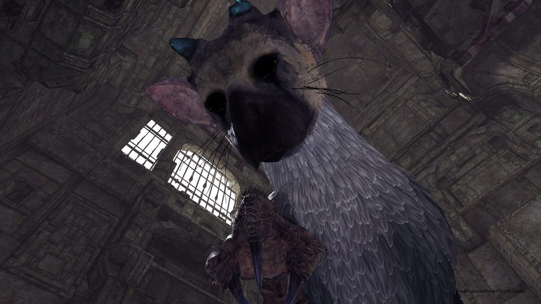 Prueben el Demo de The Last Guardian en PlayStation VR